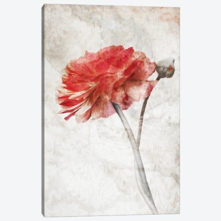 Striking Scarlet Blossom Canvas Print #KAJ125} by Katrina Jones Canvas Wall Art