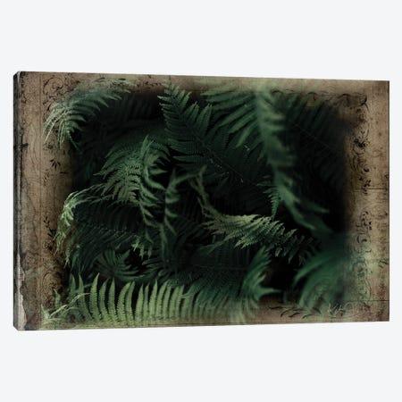 Vintage Ferns Canvas Print #KAJ132} by Katrina Jones Canvas Art