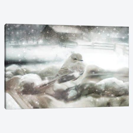 Snow Bird Canvas Print #KAJ80} by Katrina Jones Canvas Print
