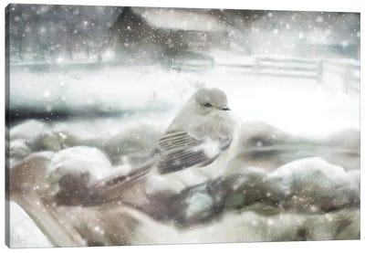 Snow Bird Canvas Art Print