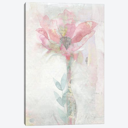 Blush Ranunculus Solitary Canvas Print #KAJ83} by Katrina Jones Canvas Print