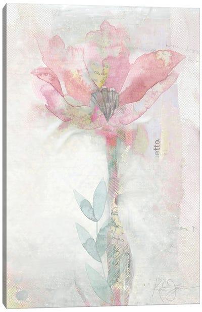 Blush Ranunculus Solitary Canvas Art Print