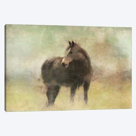 Bay Horse In A Field Canvas Print #KAJ87} by Katrina Jones Canvas Artwork