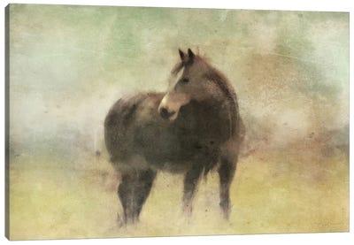 Bay Horse In A Field Canvas Art Print