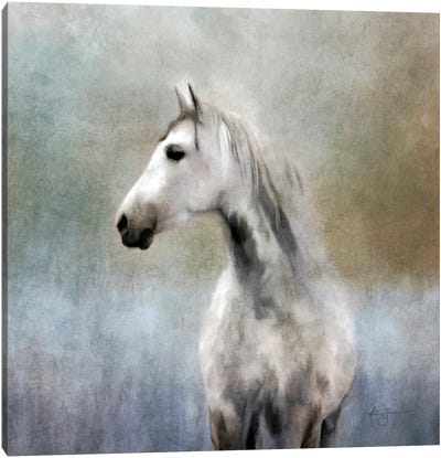 Dapple Grey Canvas Art Print