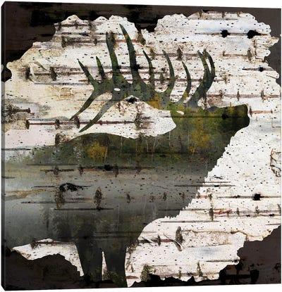 Birch Forest I Canvas Art Print