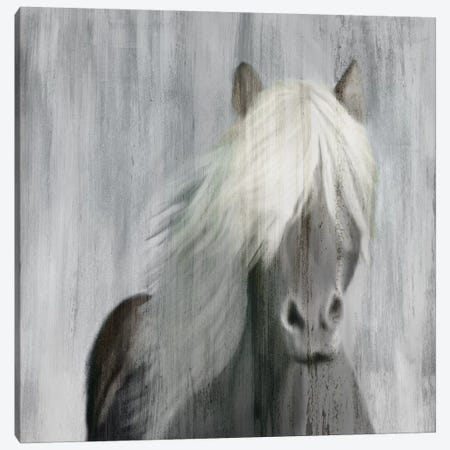 White Mane 3-Piece Canvas #KAL103} by Kimberly Allen Canvas Print