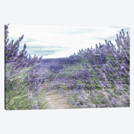 Lavender Field Canvas Print #KAL162} by Kimberly Allen Canvas Art Print