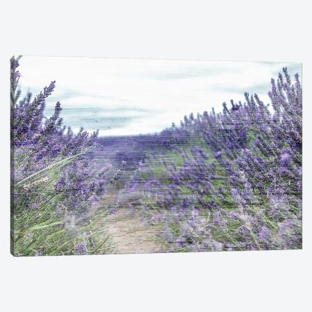 Lavender Field Canvas Print #KAL162} by Kimberly Allen Canvas Art Print