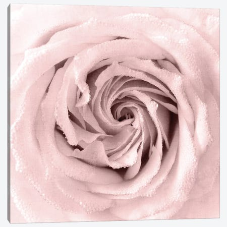 Rose Center I Canvas Print #KAL169} by Kimberly Allen Canvas Art Print