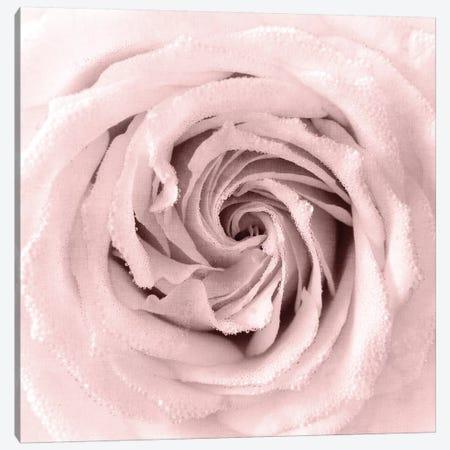 Rose Center I Canvas Print #KAL169} by Kimberly Allen Canvas Art Print