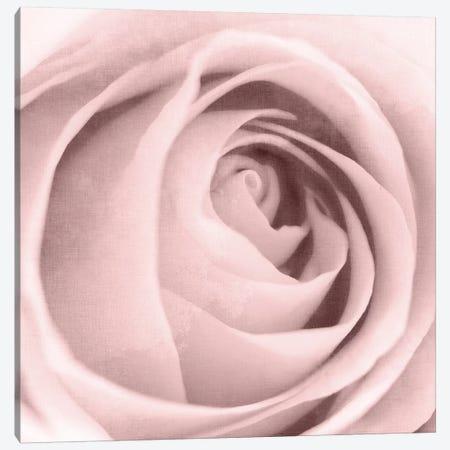 Rose Center II Canvas Print #KAL170} by Kimberly Allen Canvas Artwork