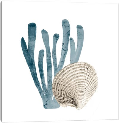 Coral Cove Blue IV Canvas Art Print