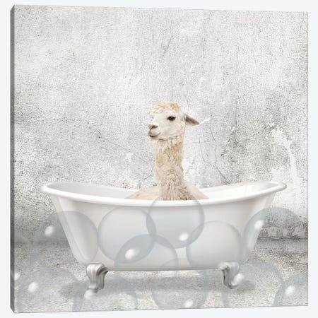 Baby Llama Bath 3-Piece Canvas #KAL297} by Kimberly Allen Canvas Artwork