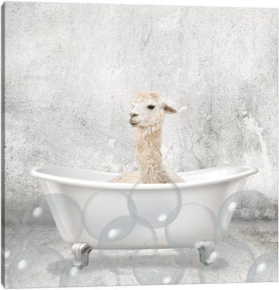 Baby Llama Bath Canvas Art Print