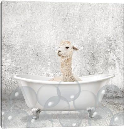 Baby Llama Bath Canvas Art Print