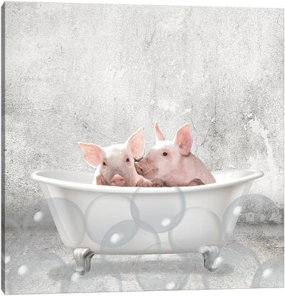 Baby Piglets Bath Canvas Art Print