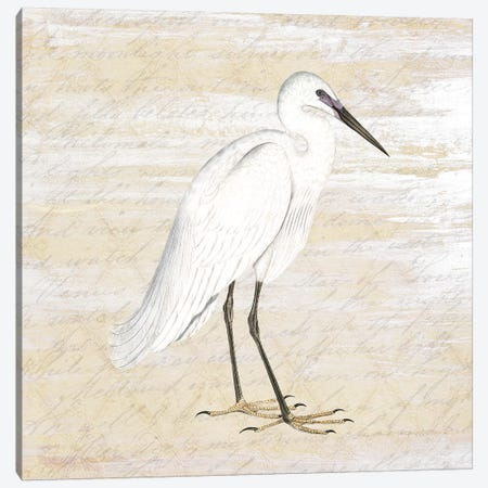 Shore Birds I Canvas Print #KAL31} by Kimberly Allen Canvas Art