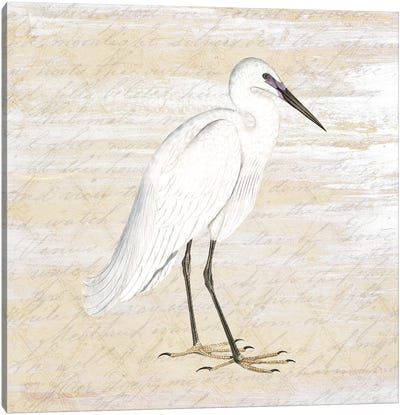 Shore Birds I Canvas Art Print