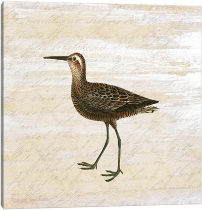 Shore Birds II Canvas Art Print