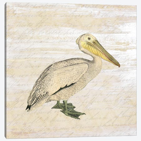Shore Birds III Canvas Print #KAL33} by Kimberly Allen Canvas Wall Art