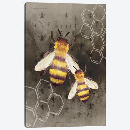 Bee Charmer II Canvas Print #KAL380} by Kimberly Allen Canvas Print