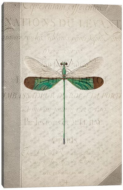 Dragonfly Book II Canvas Art Print