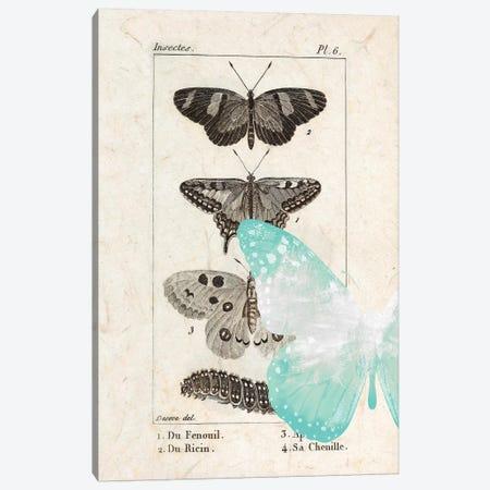 Field Guide II Canvas Print #KAL406} by Kimberly Allen Canvas Art Print