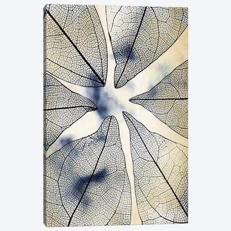 Transparent Leaves I 3-Piece Canvas #KAL465} by Kimberly Allen Canvas Art Print
