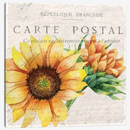 Sunflower Postcard I Canvas Print #KAL511} by Kimberly Allen Canvas Artwork