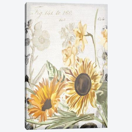 Wildflower Guide II Canvas Print #KAL516} by Kimberly Allen Canvas Art Print