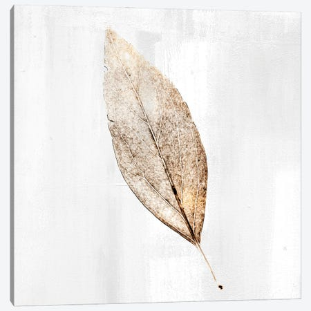 Golden Leaf I Canvas Print #KAL570} by Kimberly Allen Canvas Wall Art