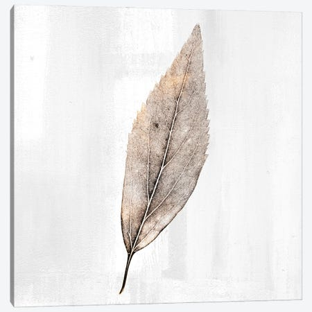 Golden Leaf II Canvas Print #KAL571} by Kimberly Allen Canvas Wall Art