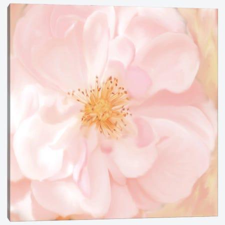 Pretty Pink Canvas Print #KAL588} by Kimberly Allen Canvas Print