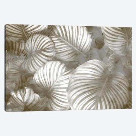 Beige Palms Canvas Print #KAL679} by Kimberly Allen Canvas Print