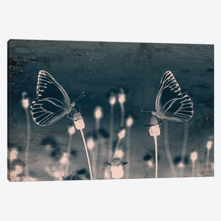 Butterfly Love Canvas Print #KAL682} by Kimberly Allen Canvas Artwork