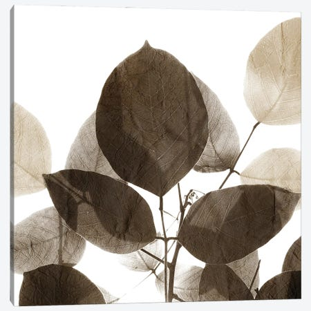 Chocolate Leaves I Canvas Print #KAL683} by Kimberly Allen Canvas Art