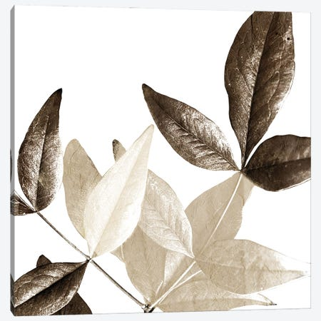 Chocolate Leaves II Canvas Print #KAL684} by Kimberly Allen Art Print