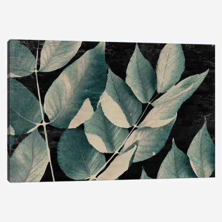 Dusty Leaves I Canvas Print #KAL685} by Kimberly Allen Canvas Print