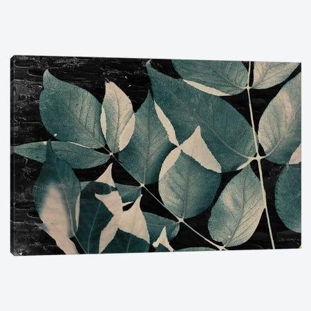 Dusty Leaves II Canvas Print #KAL686} by Kimberly Allen Art Print