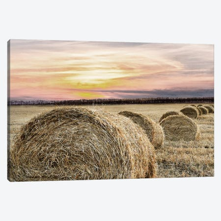 Farmers Harvest Canvas Print #KAL69} by Kimberly Allen Canvas Print