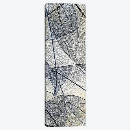 Transparent II Canvas Print #KAL713} by Kimberly Allen Canvas Artwork