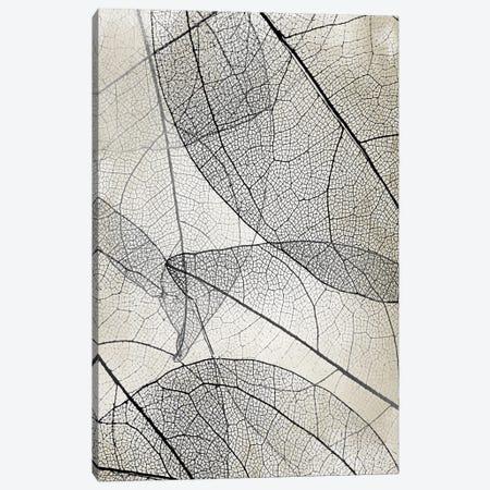 Transparent II Canvas Print #KAL714} by Kimberly Allen Canvas Art Print