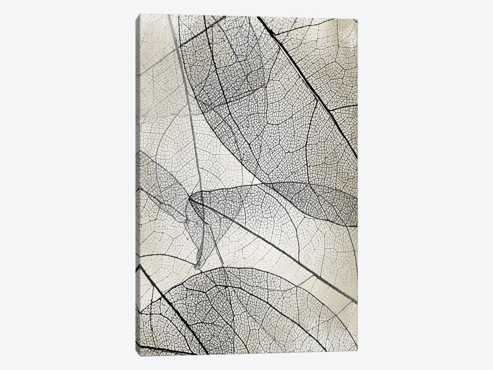 Transparent II by Kimberly Allen 1-piece Canvas Art Print