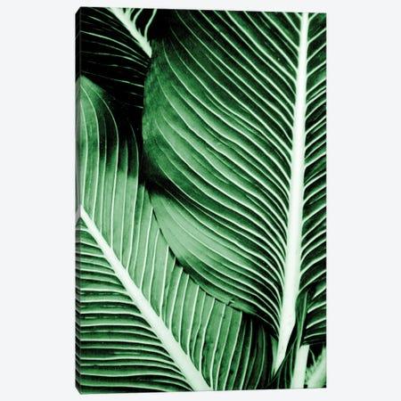 Tropical I Canvas Print #KAL718} by Kimberly Allen Canvas Artwork