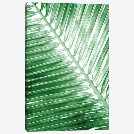 Tropical II Canvas Print #KAL719} by Kimberly Allen Canvas Art