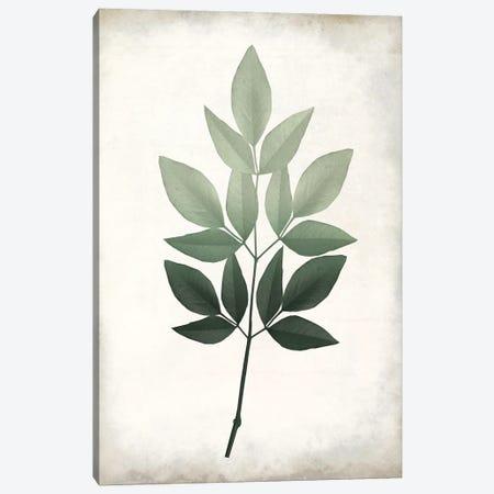Vintage Botanical Greens I Canvas Print #KAL720} by Kimberly Allen Art Print