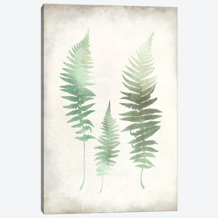 Watercolor Fern I Vintage Canvas Print #KAL724} by Kimberly Allen Canvas Wall Art