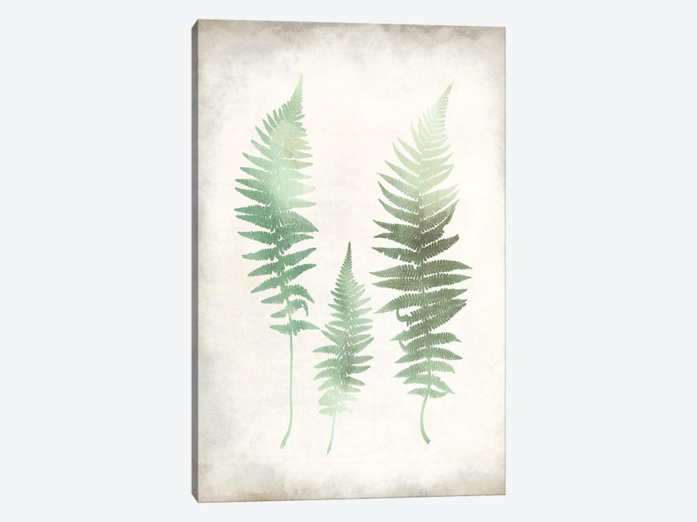 Watercolor Fern I Vintage by Kimberly Allen 1-piece Canvas Wall Art