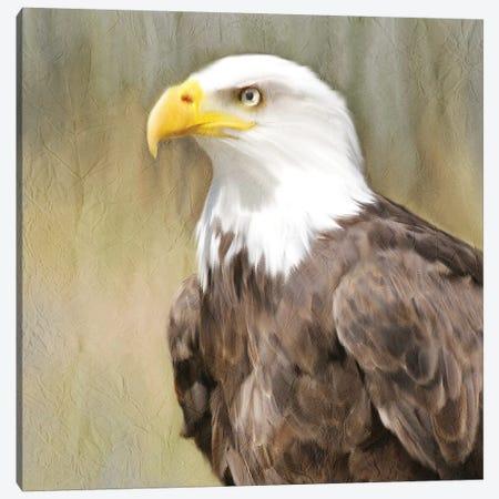 Eagle Eye Canvas Print #KAL83} by Kimberly Allen Canvas Art Print